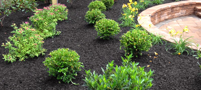 Landcaping Planting Lighting South Jersey (Burlington Mercer Camden County NJ)